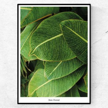 Leaves of harmony poster