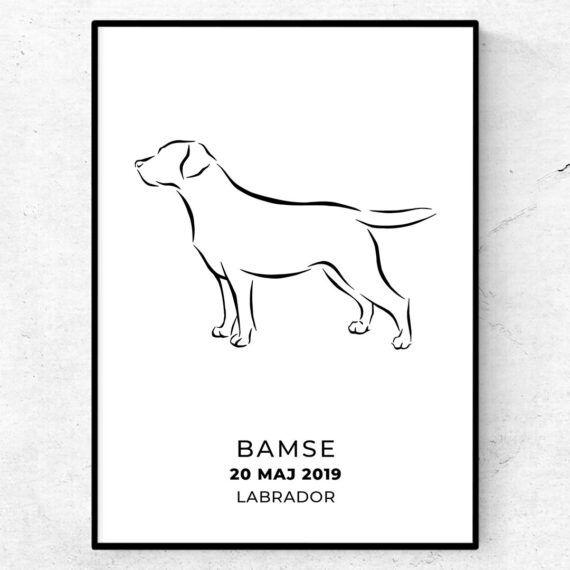labrador med eget namn poster tavla